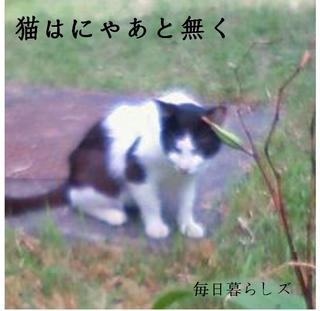 image-e13cc.jpg