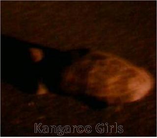 kangaroo20garls-thumbnail2.png